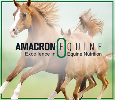 Amacron Portfolio